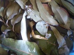 those magic leaves