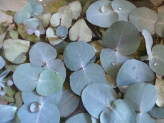 my leaves